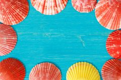 Red seashells on a blue table royalty free stock photography