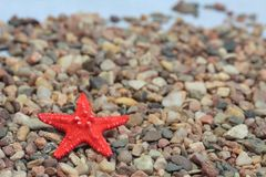 Red seastar Royalty Free Stock Photography