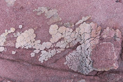 Red sedimentary Rock with white crystal on surface Royalty Free Stock Images