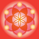 Red seed of a flower of life royalty free illustration