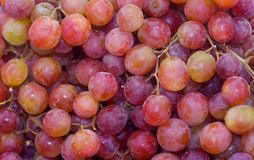 Red Seedless Grapes. Organic red seedless grapes from the farmers market Royalty Free Stock Photography