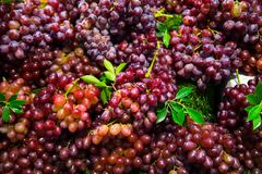 Red seedless grapes. Bunch of red seedless grapes Stock Photo