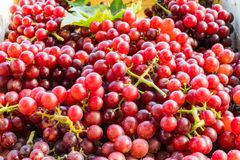 Red seedless grapes with leaves. In a wooden tray Royalty Free Stock Photos