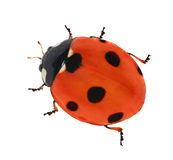 Red seven ponts ladybird stock image