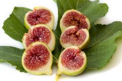 red sex för leaf för gröna hälfter för fig saftig arkivbilder