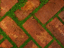 Red shaded bricks with gaps filled by leafy green growth Stock Image