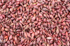 Red shallot. Background on market royalty free stock photography