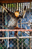 Red-Shanked Douc Langur royalty free stock image