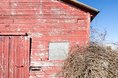 Red shed with a tangled pilke of branches. A red shed with it's paint peeling has a tangled pile of branches next to it Royalty Free Stock Images