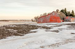 Red shed on a white snow-covered field Stock Photos