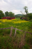 Red sheds in flower field Royalty Free Stock Photos