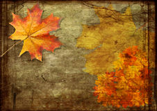 Red sheets maple grunge. Red sheets maple on old crackinged canvas Royalty Free Stock Images