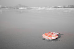 Free Red Shell Laying On The Beach Stock Photos - 13050903