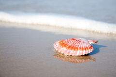 Free Red Shell On The Beachfront Royalty Free Stock Photos - 13050828