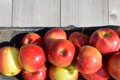 Red shiny apples. In pottery dish on grey natural wooden background with copy space for text outdoors in sunlight. Freshly harvested sweet tasty fruit as stock photography