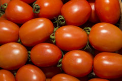 Red shiny delicious cherry tomatoes Royalty Free Stock Images