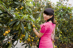 Red shirt girl and loquat Stock Image