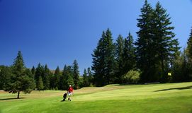 Red shirted golfer on green Stock Image