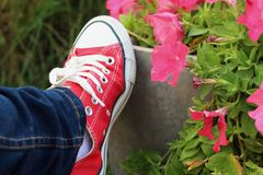 Red shoes with a background of flowers. Royalty Free Stock Image