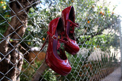 Red shoes. Hanging in the back yard Stock Image