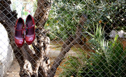 Red shoes. Hanging in the back yard Stock Photos