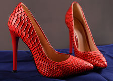 Red shoes of snakeskin. Red stiletto heels of snakeskin on blue background Royalty Free Stock Image