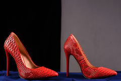 Red shoes of snakeskin Royalty Free Stock Photo