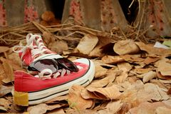 Red shoes with sunglasses on brown leaves background. Royalty Free Stock Photography