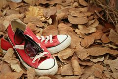 Red shoes with sunglasses on brown leaves background. Stock Image