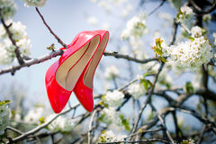 The red shoes on the tree Royalty Free Stock Image