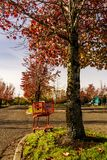 Red shopping cart under autumn tree at Sunset Square Shopping Center. Red shopping cart under autumn tree at Sunset Square Shopping Center royalty free stock photos