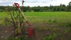 Red shovel on redcurrant bush. Red shovel resting on newly planted redcurrant bush in summer with green pasture background royalty free stock photography