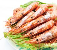 Red shrimp Royalty Free Stock Photography