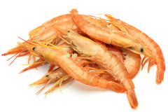 Red shrimp. This is a red shrimp from Argentina Stock Photos