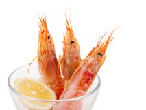 REd Shripm in the glass bowl. REd Shrimp in the glass bowl. Fresh argentine shrimp with lemon stock photos