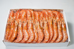Red Shrimp. With white background Stock Image