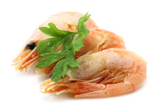 Red shrimps Stock Image