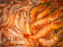 Red shrimps and big langoustines, macro royalty free stock images