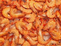 Red shrimps on a stand in a spanish market. Red shrimps on a stand in a fish supermarket Stock Photo