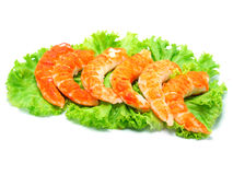 Red shrimps Stock Images