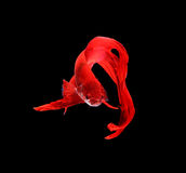 Red siamese fighting fish, betta fish isolated on black backgrou Royalty Free Stock Photo