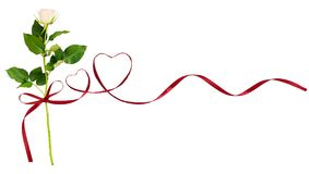 Red silk ribbon hearts and white rose flower for Valentine`s day Stock Images