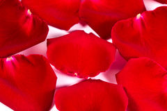 Red silk rose petals Stock Photography