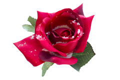 Red silk rose in snow Royalty Free Stock Photos