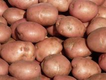 Red skin potatoes Royalty Free Stock Photography