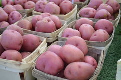 Red skin potatoes for sale Stock Images