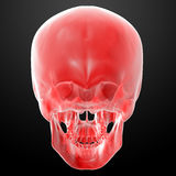 Red skull Royalty Free Stock Photos