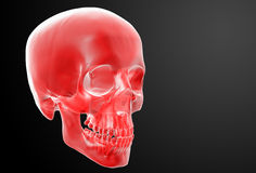 Red skull Stock Photography