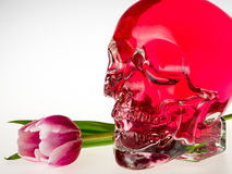 Red skull with tulip flower Stock Image