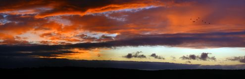 Red sky. Birds flying on the red sky. Extra large size panorama royalty free stock photo